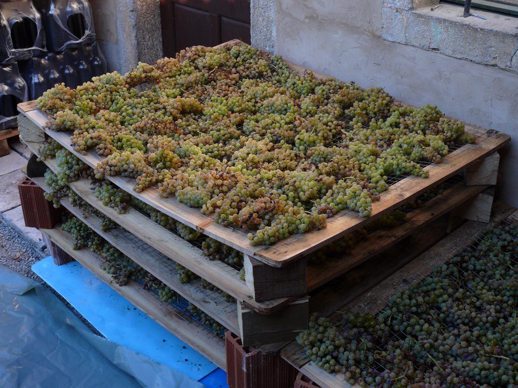 Nho được phơi khô theo phương pháp sản xuất rượu vang Appassimento