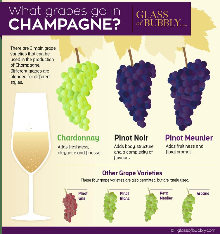 Các giống nho làm rượu Champagne