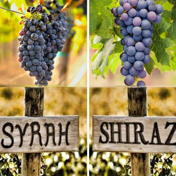 So sánh Syrah và Shiraz